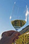 Bild-Wein